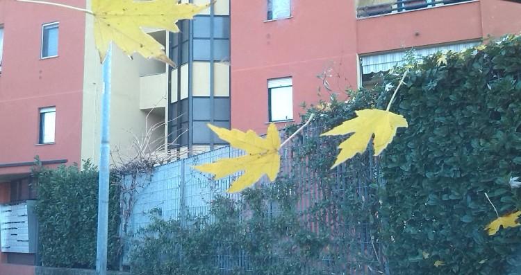 foglie in casco
